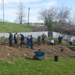 Chester Housing Authority staff joined residents on Earth Day to plant lots and lots of blueberries.